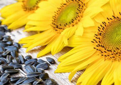 Natural Goodness of Sunflower Seeds