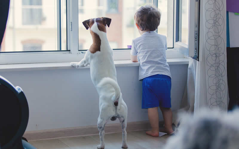 little boy and dog at window