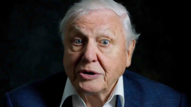 Sir David Attenborough urges as to all go plant-based