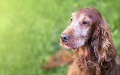 Do dogs live longer on a plant-based diet?