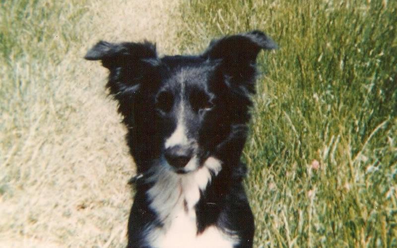 Bramble oldest living vegan dog lived until 25 years